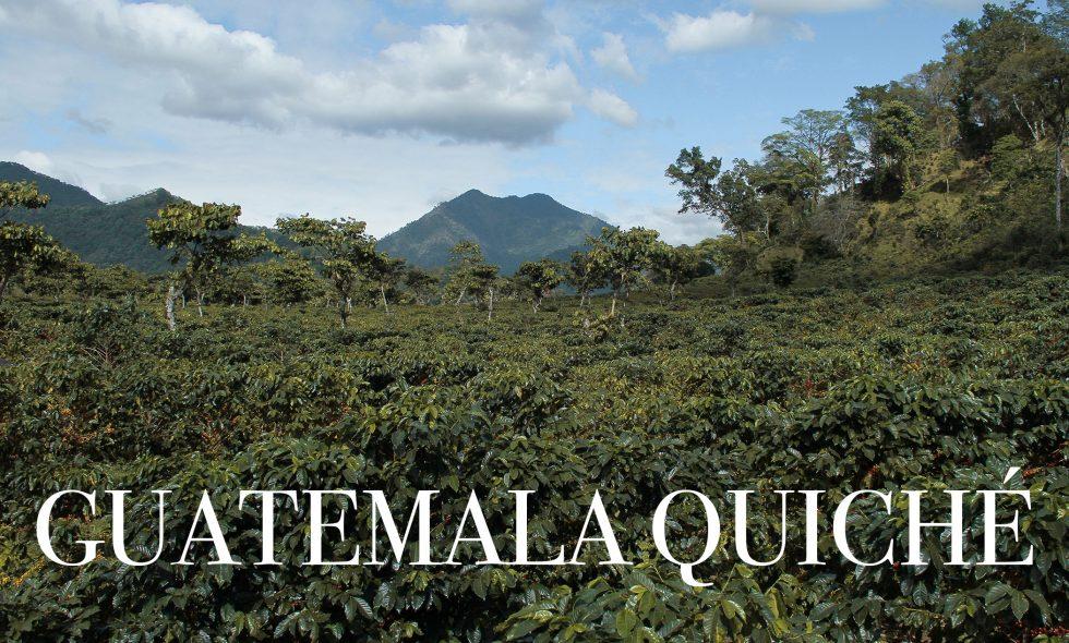 Café De Temporada: Guatemala Quiché